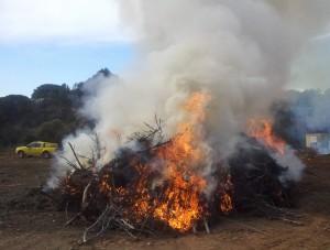El foc controlat va començar a cremar a primera hora del matí // Jose Polo