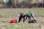 Uns pagesos treballen en uns terrenys del Parc Agrari del Baix Llobregat // Parc Agrari