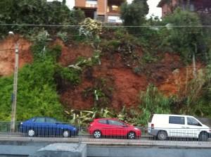 Les plantes han caigut degut a les intenses pluges de les últimes hores // Roger Tuset