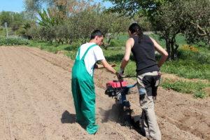 L'Oriol, un jove molinenc, fa pràctiques a un camp del Parc Agrari del Baix Llobregat // Xavier Farré