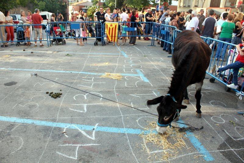 Els participants apostaven per on el burro faria les seves necessitats // Ateneu Mulei