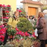 La plaça de l'església era l'espai on es trobaven principalment les parades de jardineria // Jose Polo