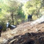 Cremen 4.000 metres quadrats de massa forestal per culpa d'un llamp