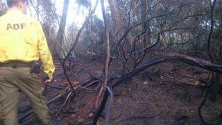 Imatge de part de la zona cremada // ADF