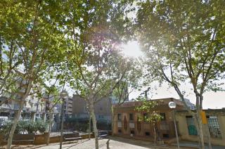 Imatges dels plataners al carrer Verge del Pilar, un dels llocs on ha calgut tractament contra la plaga // Viu Molins de Rei