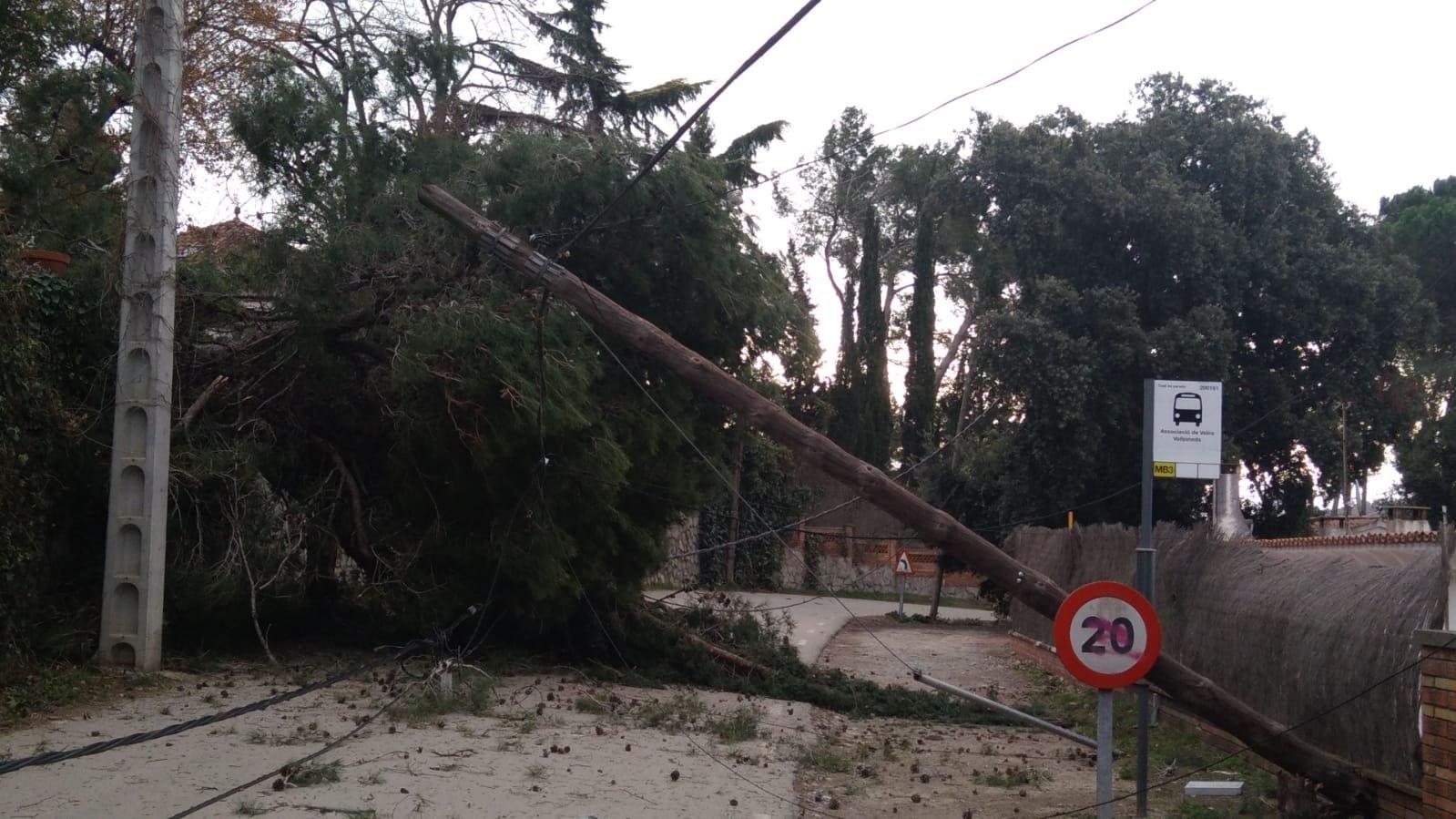 arbre caigut a Soler i Sauret